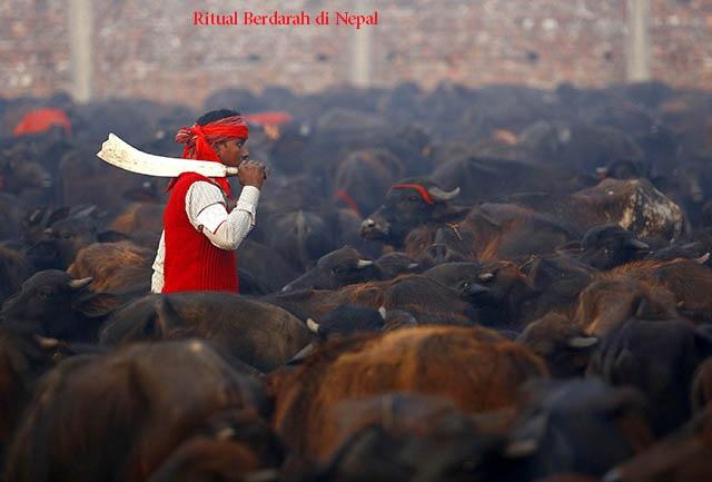 Mengenal Ritual Berdarah di Nepal